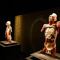Human Bodies Exhibit